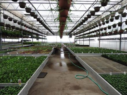 Seed room
