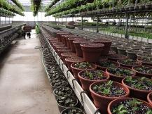 New Guinea impatiens planters