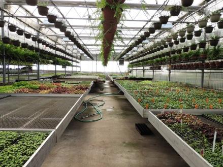 Seed room, Van Wingerden house West 1