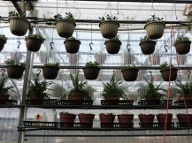 Baskets and planters, hung up and on shelves-- wherever we can find room!