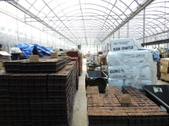 Pallets loaded high with various sizes of pots, full of soil and ready to plant