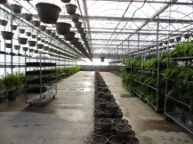 A line of baskets, with space left to the side so that we can finish hanging baskets up above