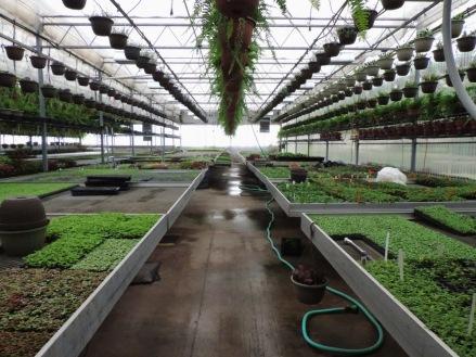 Seed room, Van Wingerden West 1