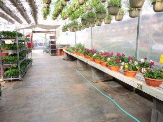 Main aisle, with a lively display of pansy bowls, herbs, and vegetables.