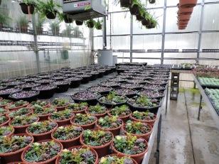 Planting larger succulent bowls