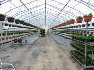 Greenhouses across the parking lot-- finally warm enough to move baskets in!