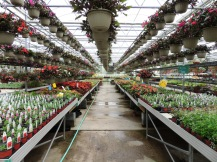 E3-- Most of the original coleus and Sunpatiens have been sold, and other things planted in their place