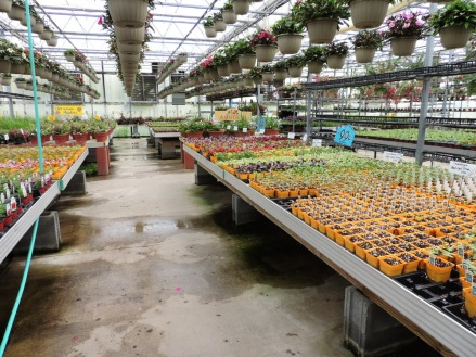 E3-- assortment of 99¢ plants for making your own mixed planters, etc!