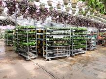 E1-- Veggie carts