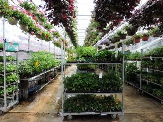 E1-- Veggie aisle